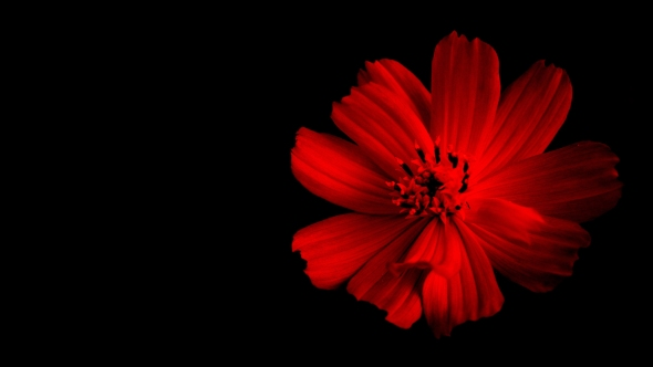 Artistic Flower image In Red Color