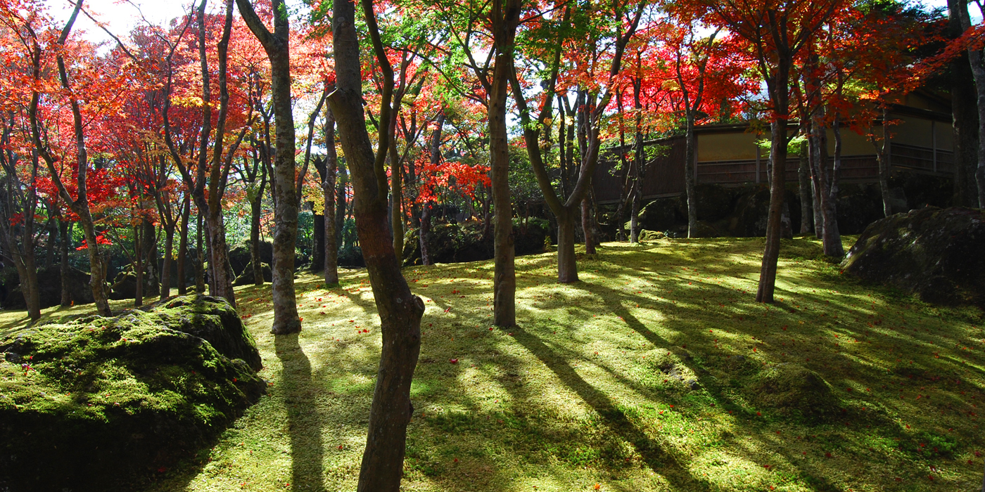 Nature Landscape Fine Art Photography