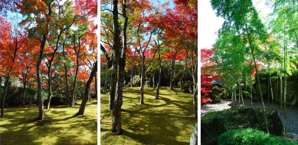 Beautiful trees photography by Paul Chong