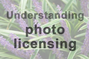 Understanding different types of photo licensing