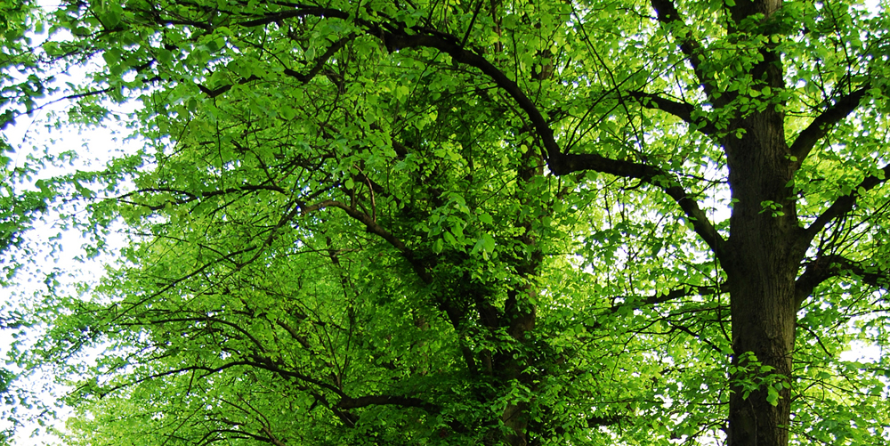 Beautiful Green Tree Leave Photography