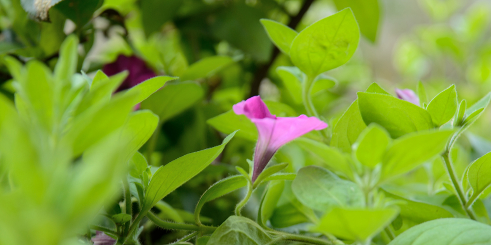 Green Plant with Pink Flower Macro Photography