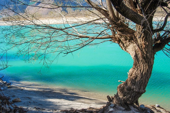 Breathtaking riverside scenery of old featured tree along the white sand.