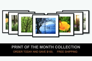 Print of the month collection special discount