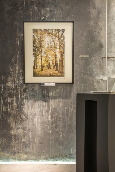 Nature Landscape Photo Exhibition