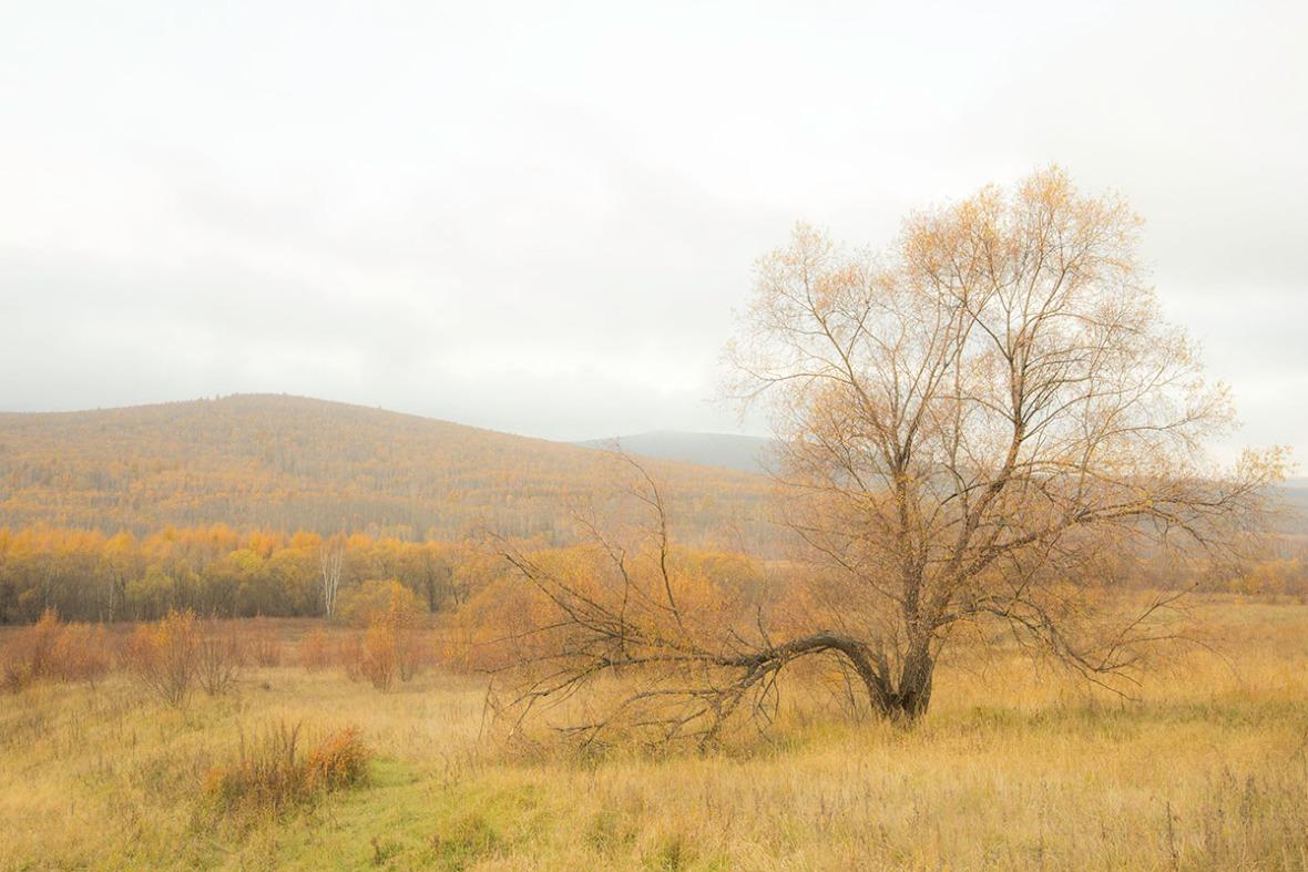 Mongolia Autumn Landscape