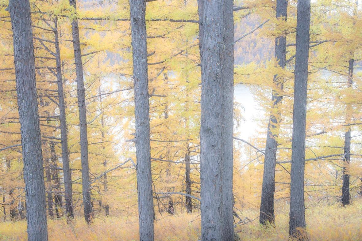 Autumn Season Forest Trees
