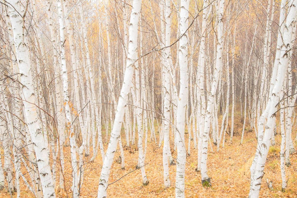 Autumn Scenery Landscape Fine Art Photography