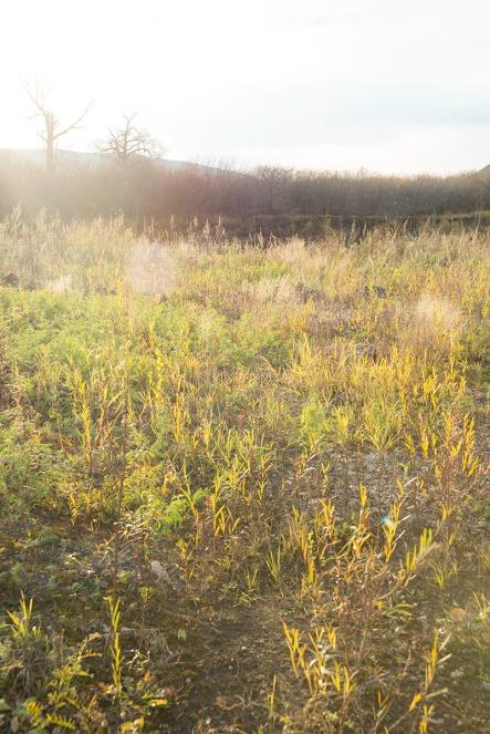 Sunlight on the open field photograph