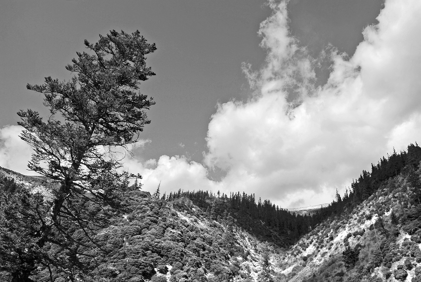 Landscape Scenery Paul Chong Photography - Black and white photography with color accents