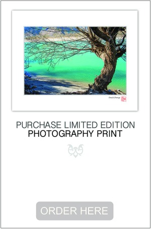 Purchase beautiful quality photography print