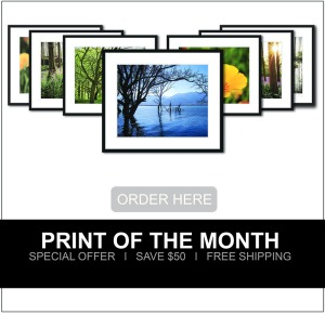 Print of the month special discount