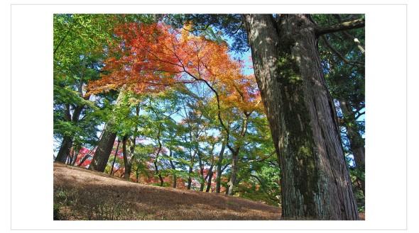 Japan Fine Art Photography - Paul Chong 4