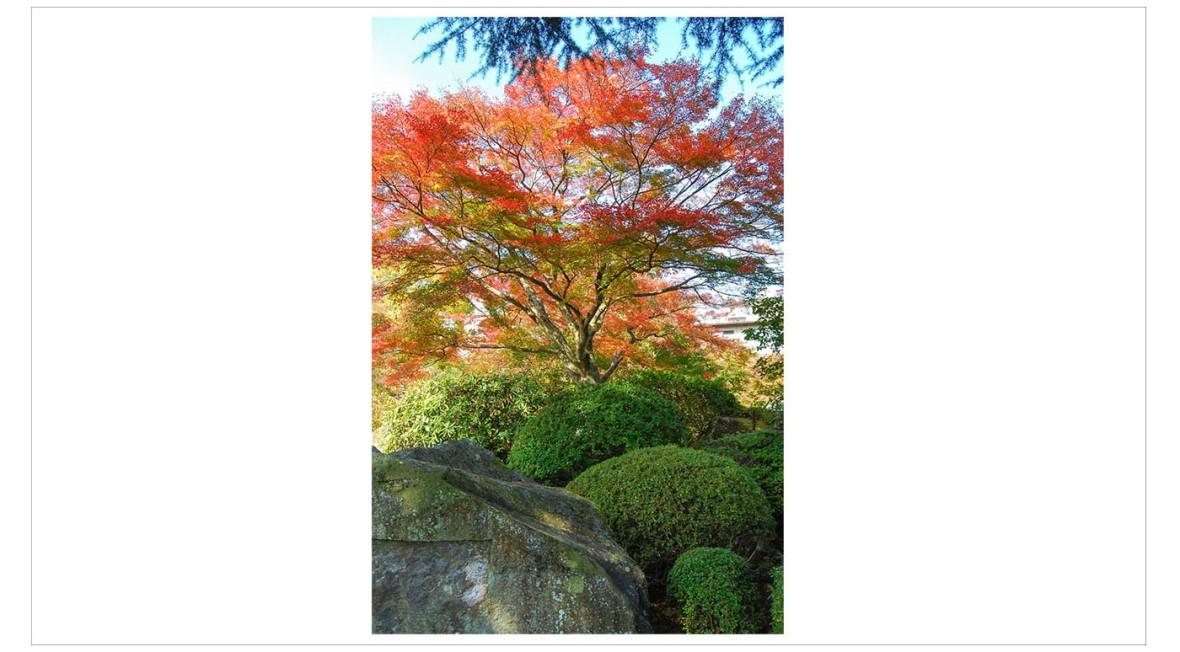 Japan Fine Art Photography - Paul Chong 8