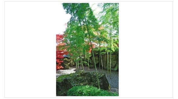 Japan Fine Art Photography - Paul Chong 9