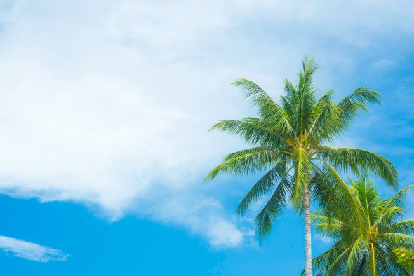 palms-and-sky-lipa-noi