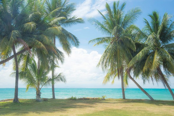sunny-palms-lipa-noi